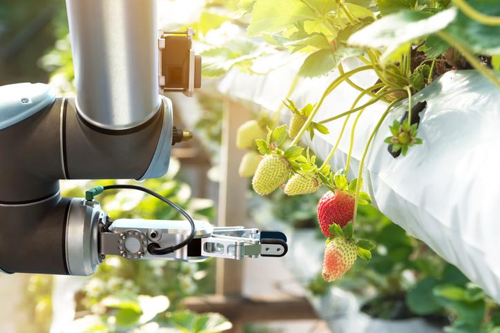 视觉引导机器人水果采摘:机器视觉的作用-机器视觉_视觉检测设备_3D视觉_缺陷检测